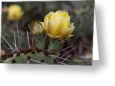 Yellow Cactus Greeting Card