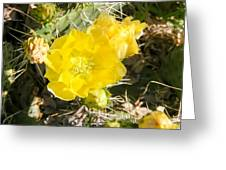 Yellow Cactus Blooms And Buds Greeting Card