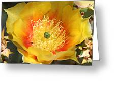 Yellow Cactus Flower Square Greeting Card