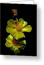 Yellow Cactus Flowers And Buds Greeting Card