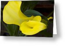 Yellow Cala Greeting Card