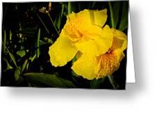 Yellow Canna Singapore Flower Greeting Card