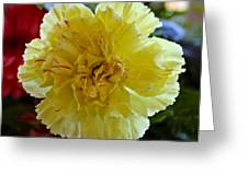 Yellow Carnation Delight Greeting Card