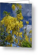 Yellow Cassia Greeting Card