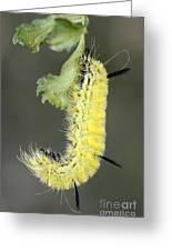 Yellow Caterpillar 1 Greeting Card