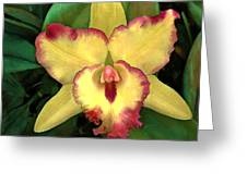 Yellow Cattleya With Red Ruffles Greeting Card