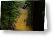 Hidden Cedar Sink Creek Greeting Card
