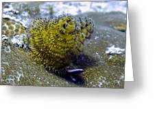 Yellow Christmas Tree Worm Greeting Card