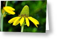 Yellow Cone Flower Greeting Card