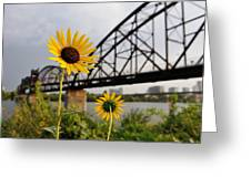 Yellow Cone Flowers And Bridge Greeting Card