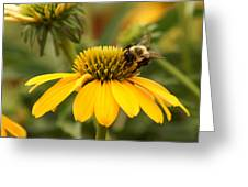Yellow Coneflower And Bee Greeting Card