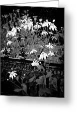 Yellow Coneflowers Echinacea Wrought Iron Gate Bw Greeting Card