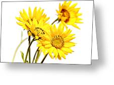 Yellow Country Wildflowers Greeting Card