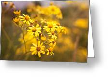 Yellow Countryside Greeting Card