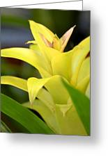 Yellow Cream Tropical Greeting Card