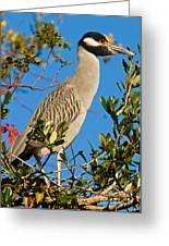 Yellow Crown Night Heron Greeting Card