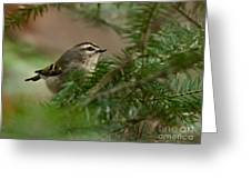 Yellow-crowned Kinglet Greeting Card
