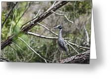 Yellow Crowned Night Heron Greeting Card by Frank Feliciano
