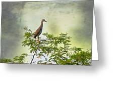 Yellow-crowned Night Heron Swaying In The Wind Greeting Card