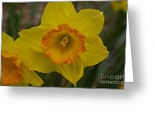 Yellow Daffies Greeting Card