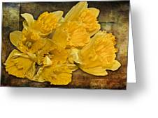 Yellow Daffodils And Texture Greeting Card