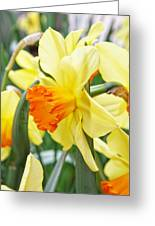 Yellow Daffodils  Greeting Card by Cathie Tyler