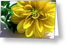 Yellow Dahlia Closeup Greeting Card
