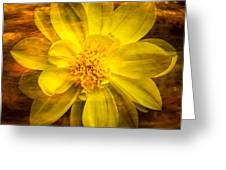 Yellow Dahlia Under Water Greeting Card