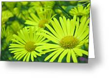 Yellow Daisies Close-up Greeting Card