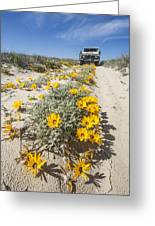Yellow Daisies (didelta Carnosa) Greeting Card