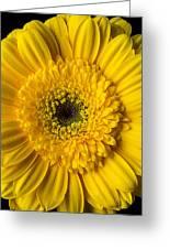 Yellow Daisy Close Up Greeting Card