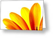Yellow Daisy Petals Macro Greeting Card