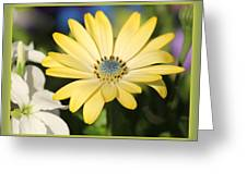 Yellow Daisy With Boarder Greeting Card
