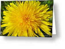 Yellow Dandelion With A Little Heart Greeting Card