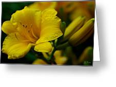 One Day Lily  Greeting Card