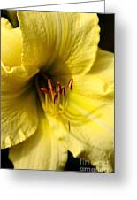 Grace Yellow Day Lily Art Greeting Card
