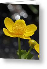 Yellow Delight Greeting Card