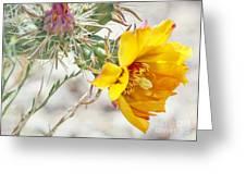 Yellow Desert Flower Greeting Card