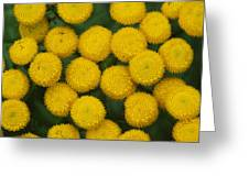 Yellow Dots Greeting Card