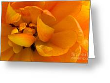 Yellow Double Tulip Greeting Card