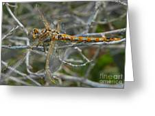 Yellow Dragonfly Greeting Card