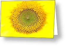Yellow Dreams  Greeting Card by Kim Galluzzo Wozniak