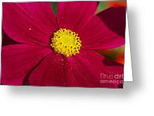 Yellow Dusting Greeting Card