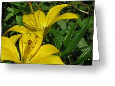 Yellow Easter Lily Greeting Card
