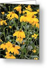Yellow Echinacea Greeting Card