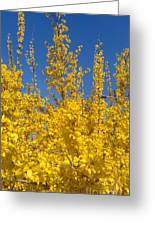 Yellow Explosion Greeting Card