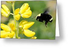 Yellow Faced Greeting Card