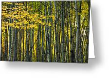 Yellow Fall Birch Leaves Against An Greeting Card