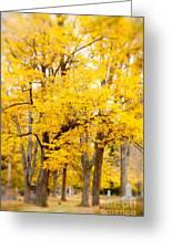 Yellow Fall Greeting Card