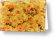Yellow Fall Mums Greeting Card